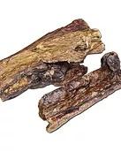 Tripe Kamelenlong 250 gram