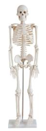 Skelet mens 78 cm