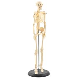 HEINE SCIENTIFIC Miniatuur skelet voor op uw bureau