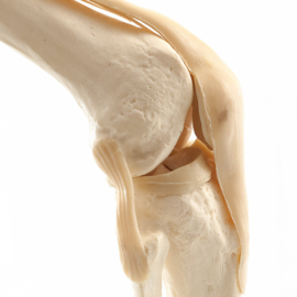 HEINE SCIENTIFIC Anatomisch model knie met ligamenten