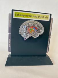 Schizofrenie model (transparant hersen helft)