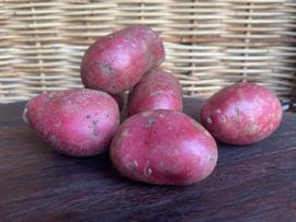 NIEUWE OOGST 2021 Biologische ALOUETTE aardappel (rode schil), verpakt per kilo
