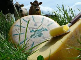 Bio Boerenkaas (rauwmelkse) JONG           verpakt per ca. 500 gram