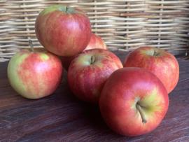 Biologische Appels Elstar NIeuwe OOGST  per kilo