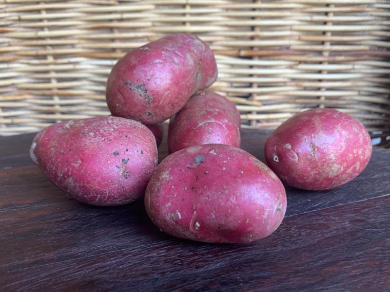 NIEUWE OOGST Biologische ALOUETTE aardappel (rode schil), verpakt per kilo