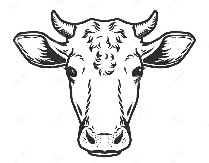 Bio Rundvlees
