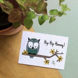 Bloom Your Message - Bloeikaarten 'Hip Hip Hooray!' (fleurige bloemen)