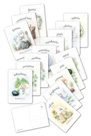 MOOQI - Ansichtkaarten voordeelpakket 16 stuks