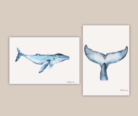 Walvisstaart poster A4