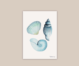Schelpjes poster A4