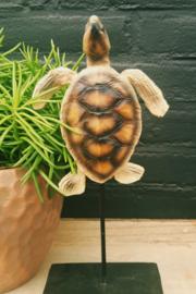 Schildpad op voet