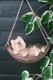 Hondje Trixie in hangmat