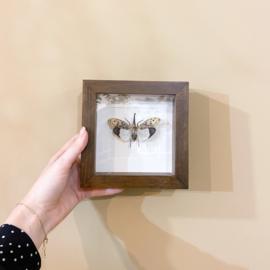 Insect in lijst 'vlinder'
