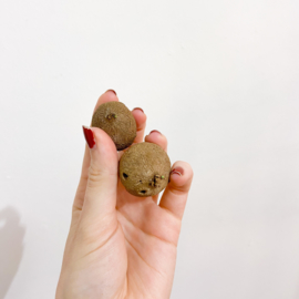 """Stephania erecta """"mini''"""