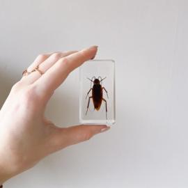 Insect in hars 'kakkerlak'