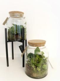 Plant terrarium S