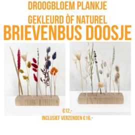 Droogbloem plankje 'kleurrijk'