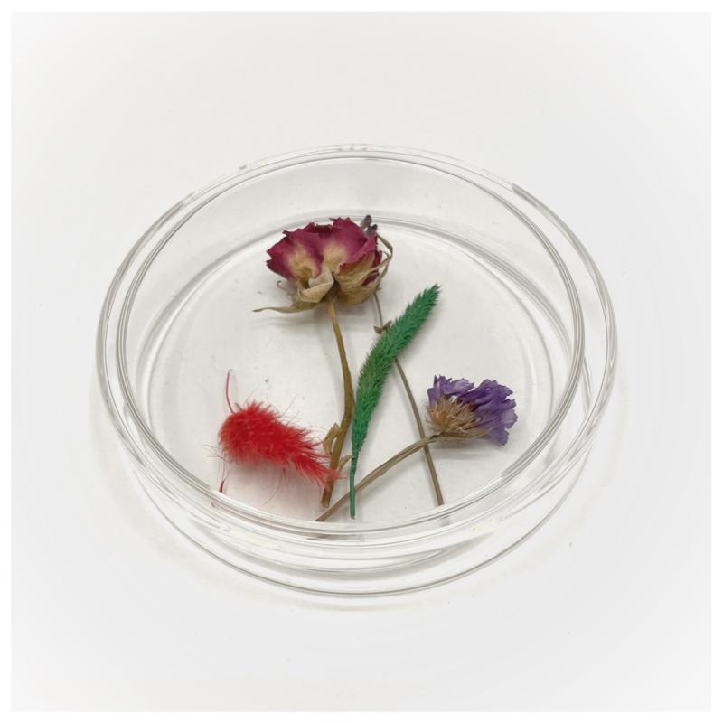 Petrischaaltje met droogbloemen