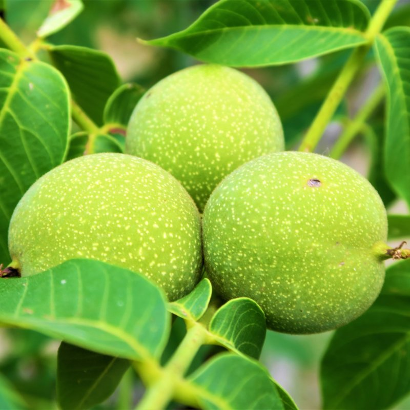 Green Walnuts Jam - 220g