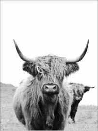 A6 kaart | Highlander