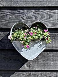 Zinken planten bak Hart voor aan de muur 31x30x10.5cm