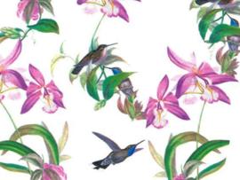 Vloeipapier | Colibri