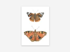 Ansichtkaart vlinders