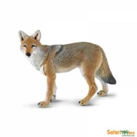 Coyote  S227229