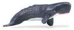 Sperm whale calf  S275629