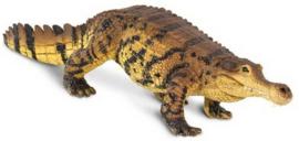Sarcosuchus   S100356