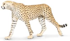 Cheetah   XXL   S112889