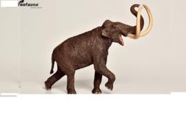 Steppenmammoet               Mammuthus  trogontherii