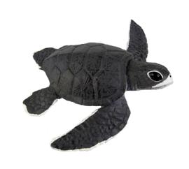 Zeeschildpad jong   S260429
