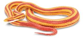 Corn snake    S257429