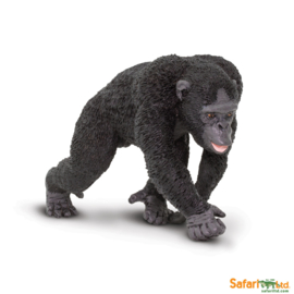 Chimpansee  S224729