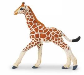 Giraffe kalf  S268529