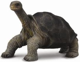 Pinta Island Schildpad   CollectA 88619