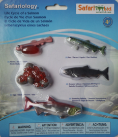 Zalm levenscyclus