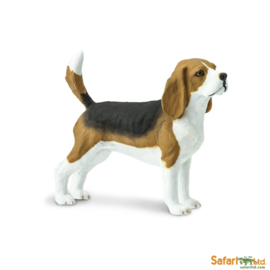 Beagle Safari Ltd S254929