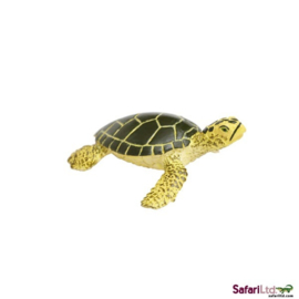Zeeschildpad groene   jong  S201329