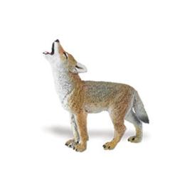 Coyote pup   S294929