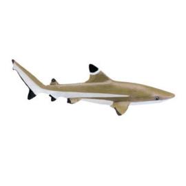 Blacktip Reef Shark   S200029
