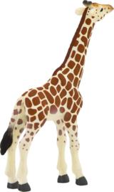 Giraffe kalf Mojo 387007