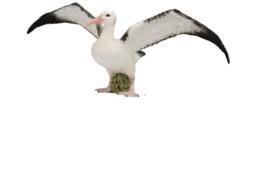 Albatros CollectA 88765