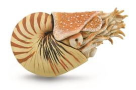 Nautilus pompilius  CollectA 88907
