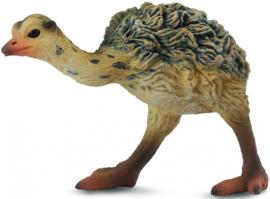 Struisvogel kuiken lopend
