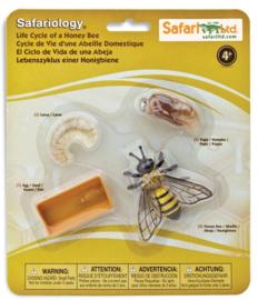 Honingbij  levenscyclus