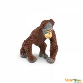 Orangutan baby  S293629
