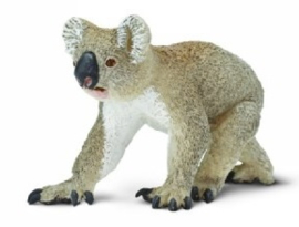 Koala  S225329