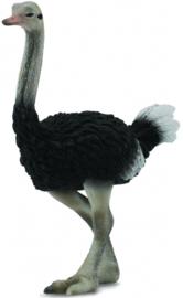 Struisvogel   CollectA 88459